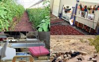 پرداخت ۱۱ هزار میلیارد تومان تسهیلات اشتغال روستایی